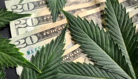 Cannabis leaves with American twenty dollar bills