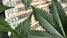 Cannabis leaves with American twenty dollar bills